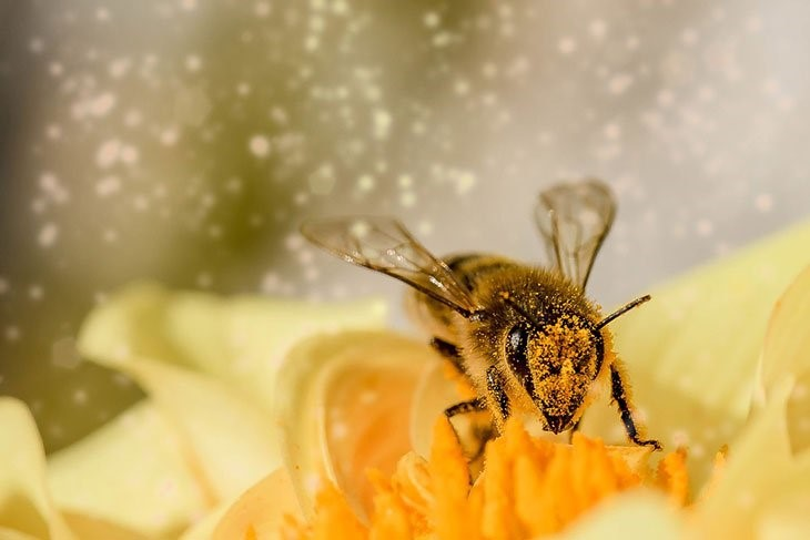 Ruches en entreprise - Abeilles - Pollinisateurs
