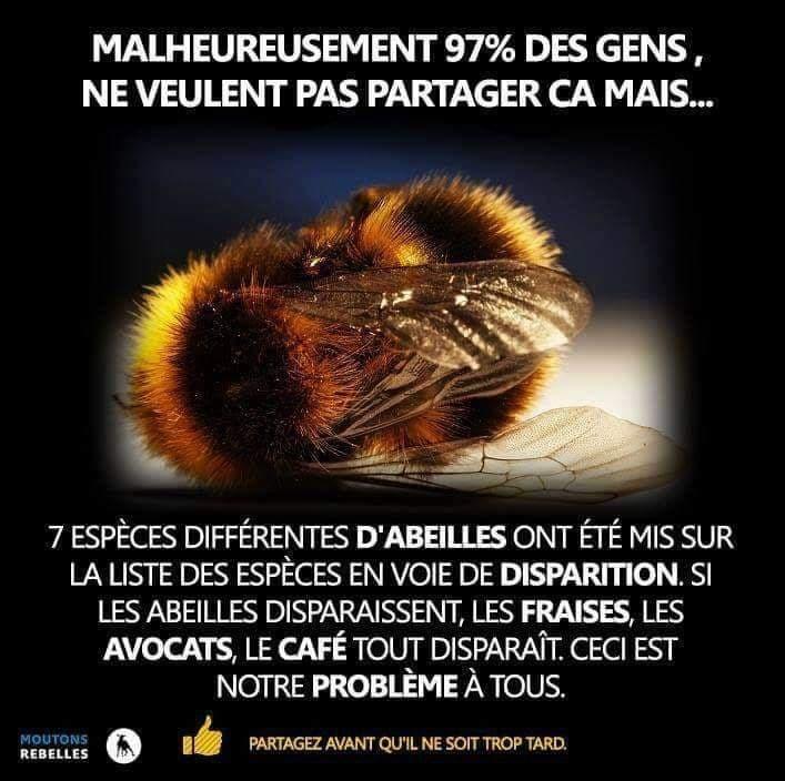 sauvegarde des abeilles