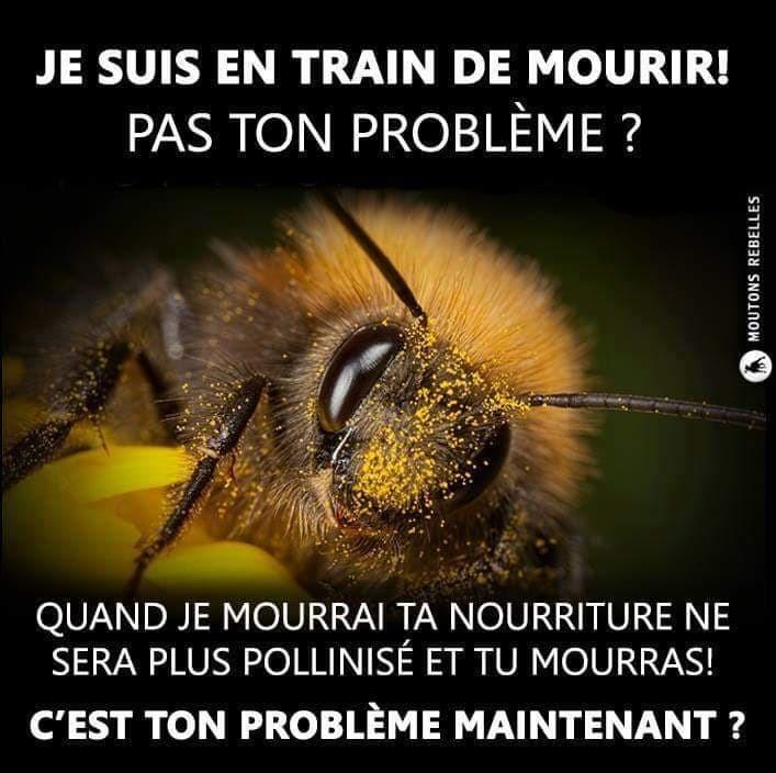 Agir sauvegarde abeilles