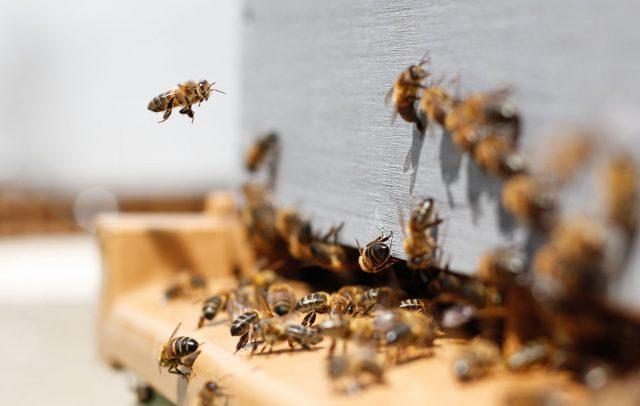 Agir pour la sauvegarde des abeilles