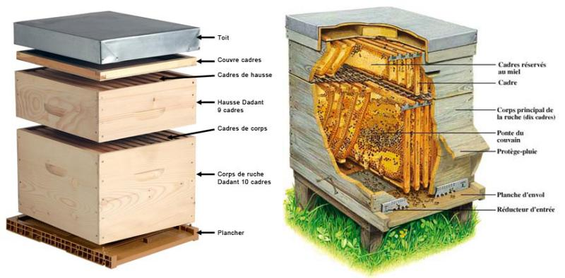 Intérieur de la ruche