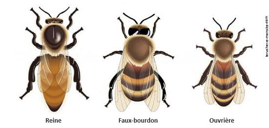 Dans la ruche