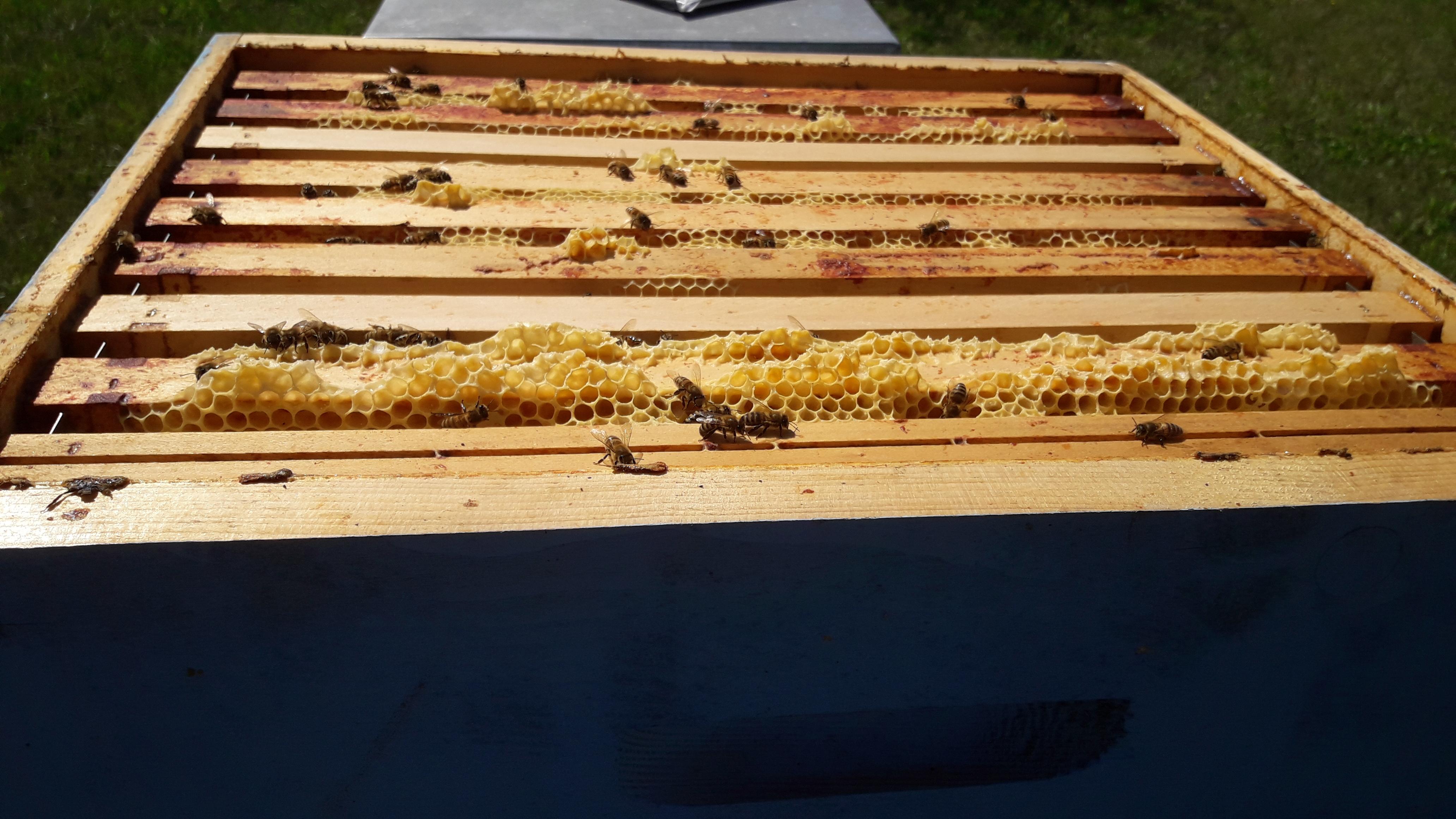 SharePrint récolte son miel