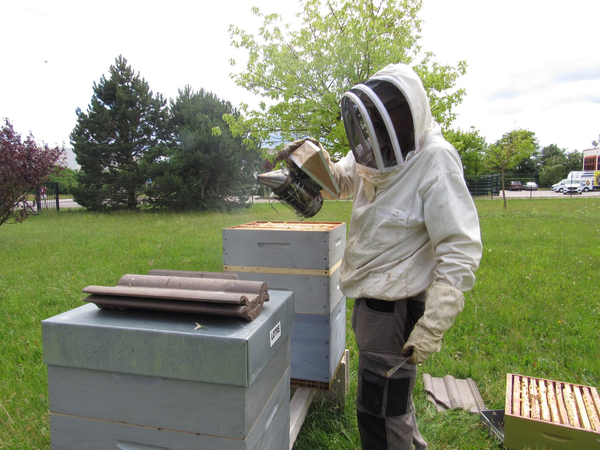 ruches récolte de miel SharePrint